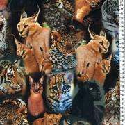 Vilda katter