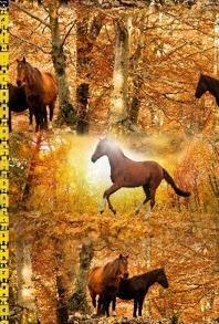 Hästar - Hästar