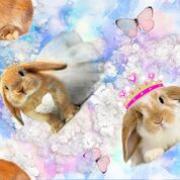 Digitaltryck kanin