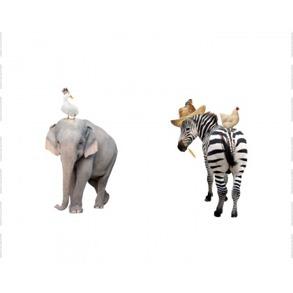 Elefant/zebra - Elefant/zebra