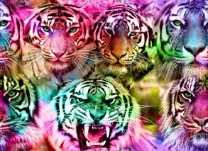 tigrar - tigrar