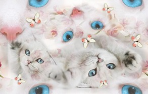 Digi trikå katt vit - Digi trikå katt vit