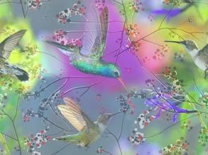 Regnbågs kolibri - Regnbågs kolibri