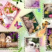 Vykort med kaniner