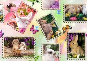 Vykort med kaniner - Vykort med kaniner