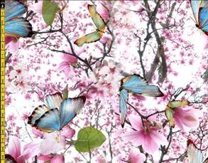 Fjärilsblomster - Fjärilsblomster