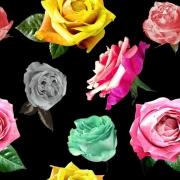 Färg glada rosor