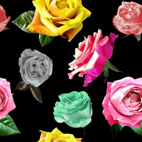 Färg glada rosor - Färg glada rosor