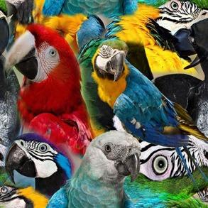 Papegoja - papegoja