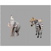 elefant/zebra Grå