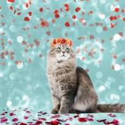 Vacker katt