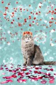 Vacker katt - Vacker katt