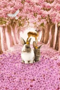 Kaniner - Kaniner