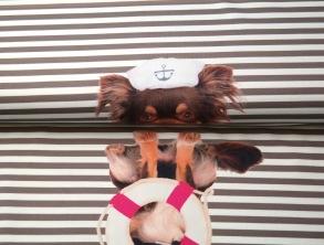 Sjömans hund - Sjömanshund