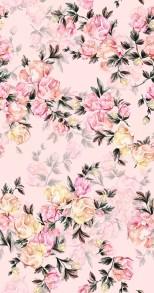 rosor rosa - Rosor Rosa