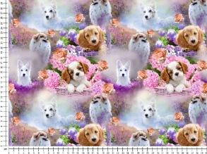 puppies - Puppies
