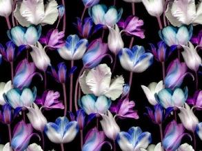 Flower Tulips - Flower Tulips