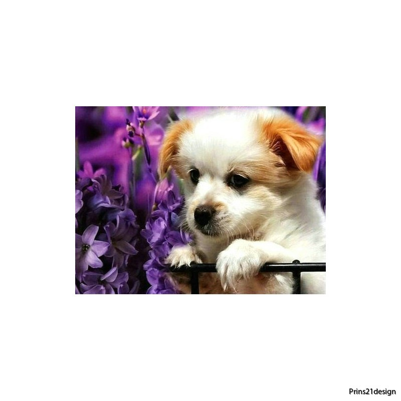 wholesale-cute-puppy-diamond-painting-manufacture-20312855