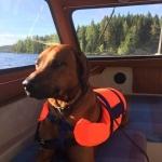 Less i båten