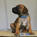 Mr Blue H