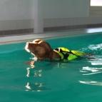 Klever på simmet