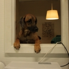 Loxia hänger ut genom fönstret