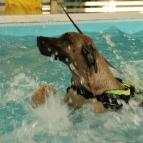 Loxia på simmet 1