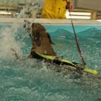 Loxia på simmet