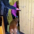 Siva i grishuset