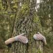 Trær lue & Trær votter