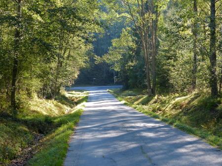 Man vandrar fortfarande genom lummig grönska.
