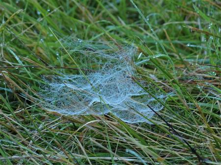 Morgondaggen avslöjar spindelns fångstnät.