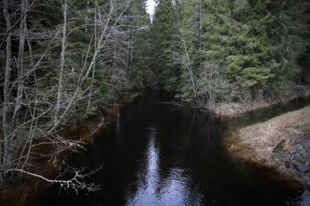 Torpedalsälven i Östervallskog letar sig fram genom granskogen . . .