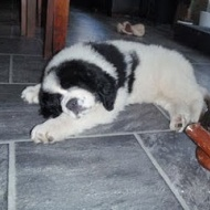 Tyson sover