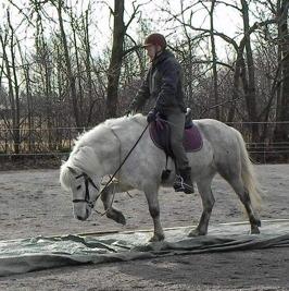 Miljöträning häst