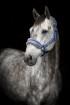 Grimma Horse Unique