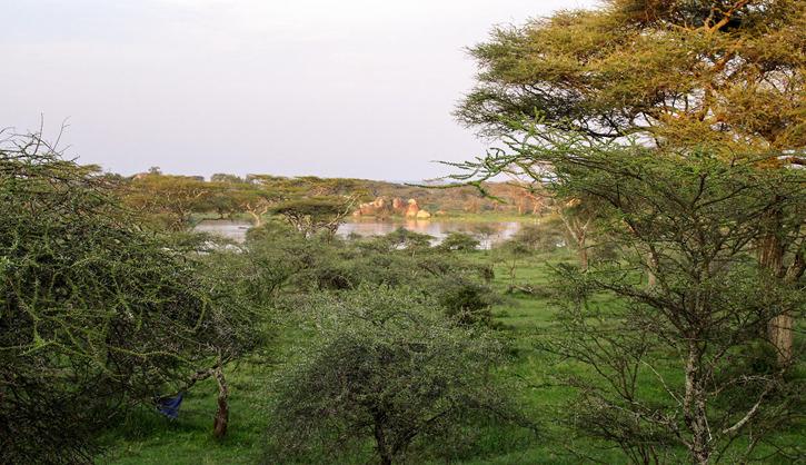 Vy från rummet på Seronera Wildlife Lodge