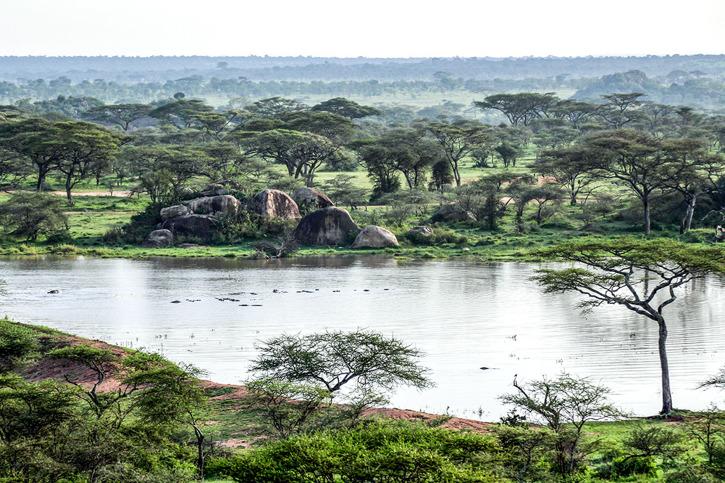Utsikt från lodgen. Flodhästar i sjön.