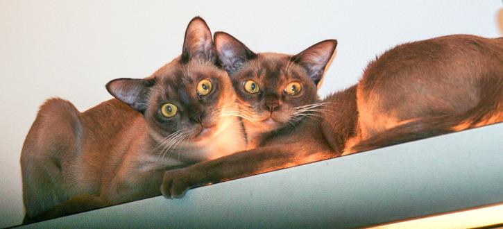 Pippi & Madicken