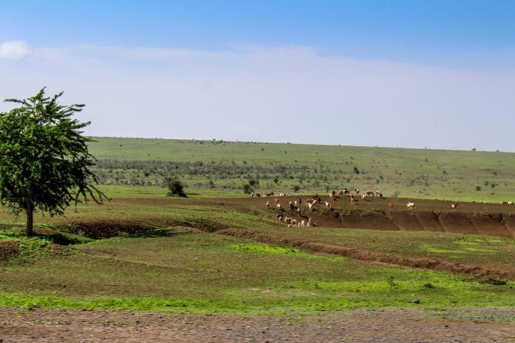 På väg mot Lake Manyara.