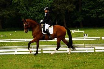 Holsteins Florentino Tävling 2016 i Holland