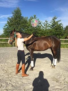 Olika vertyg hjälper dig att träna hästens reaktioner.