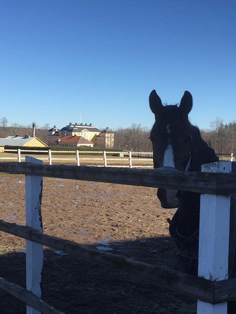 Mamma skötte om ala hästarna medan vi var borta. Här är hon hos Farmer på Ericsberg