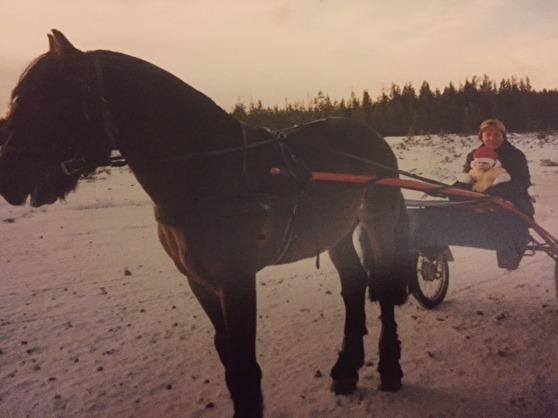 Kanske var det redan här intresset för hästar föddes hos Christian. Här i knät på farfar Erik i vagnen efter framgångsrike kallblodstravaren Repo Stegg. En härlig vinterdag på flygfältet i Hedeviken.