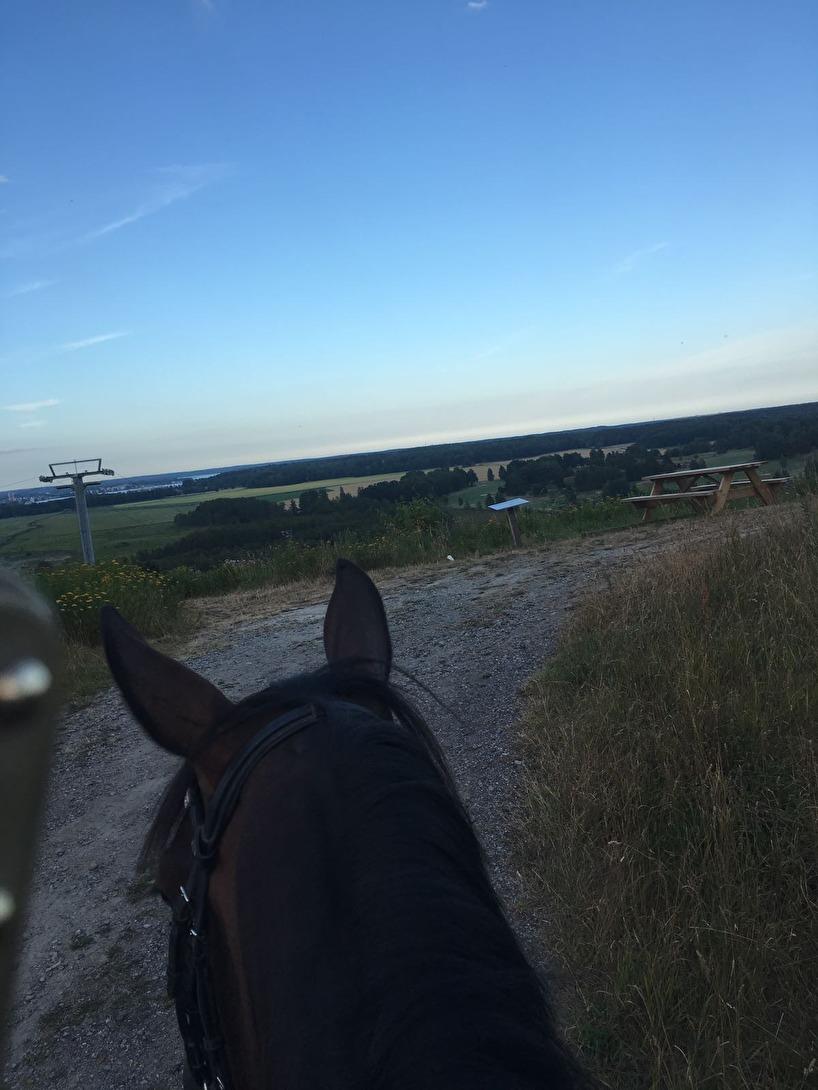 Heavenly på skogstur med utsikt över Nyköping. Inte riktigt lika flashigt som Sånfjället men ändå:)