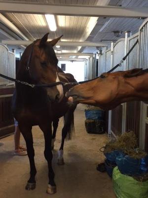 Farmers flickvän Chocko är väldigt söt tycker Flo som här försöker övertala Chocko om att få bara en liten puss:) det gick inte. Hon är trogen sin pojkvän. Farmer och Choko är och förblir ett par:)