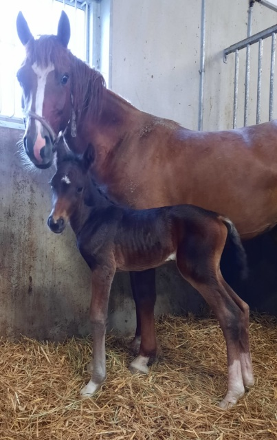 Total Crush DH med sin  nyfödda bäbis Wish of Fortune DH född 22 maj 2021 e. Fortnite ue. Total Hope