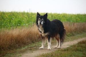 träning av den äldre hunden, halland, halmstad, varberg, falkenberg, laholm, båstad,