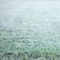 Green med frost