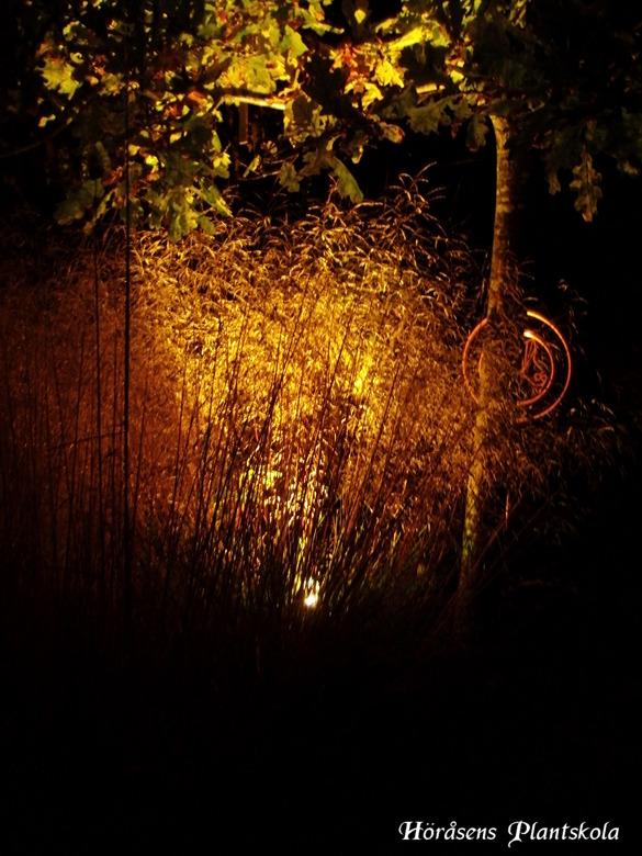 Trädgårdsbelysning Halland – stort sortiment av trädgårdsbelysning på Höråsens plantskola & gardencenter i Tvååker mitt i Halland mellan Falkenberg, Varberg & Ullared